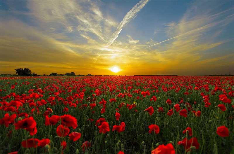 sunset-big